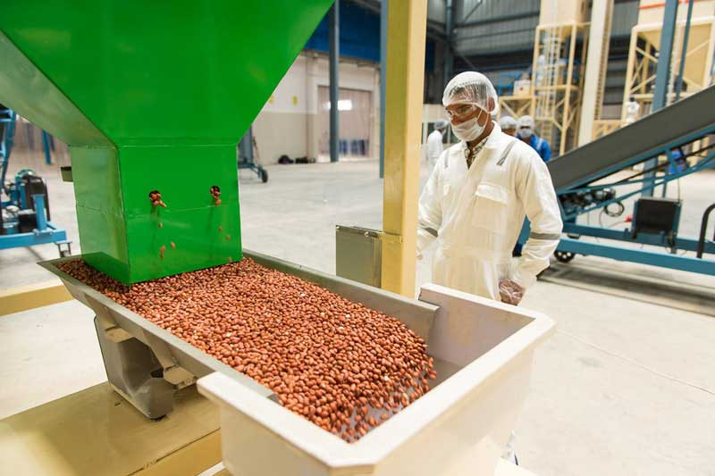 Peanut intake station at Gujarat factory