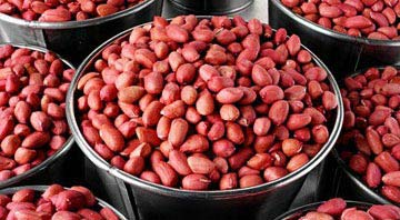 Indian Groundnuts Exporters